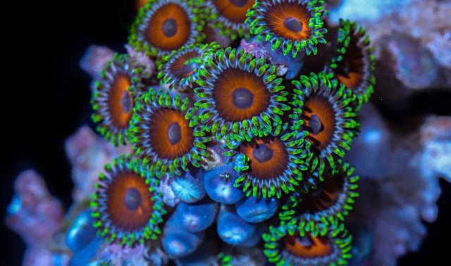 Цвета кораллов: таймлапс из 25 000 подводных макрофотографий, снятых в течение года