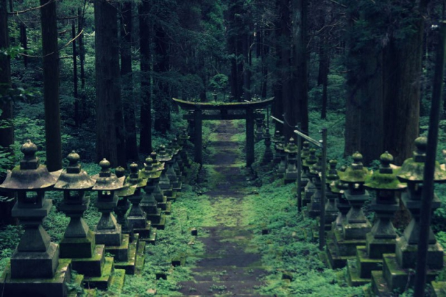 Лесная святыня в Японии