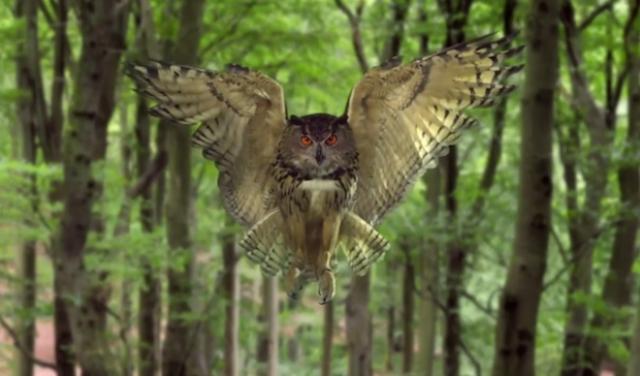 Завораживающее замедленное видео: «Скрытые чудеса мира природы»