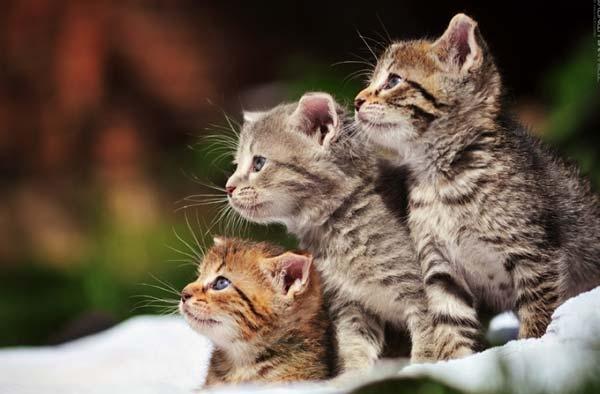 Самые очаровательные фотографии кошек