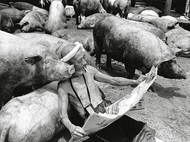 Свиньи и папа