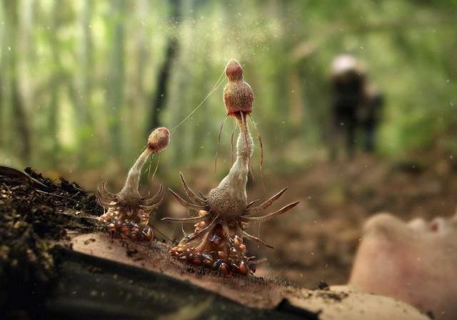 Короткометражка «Пыльца»