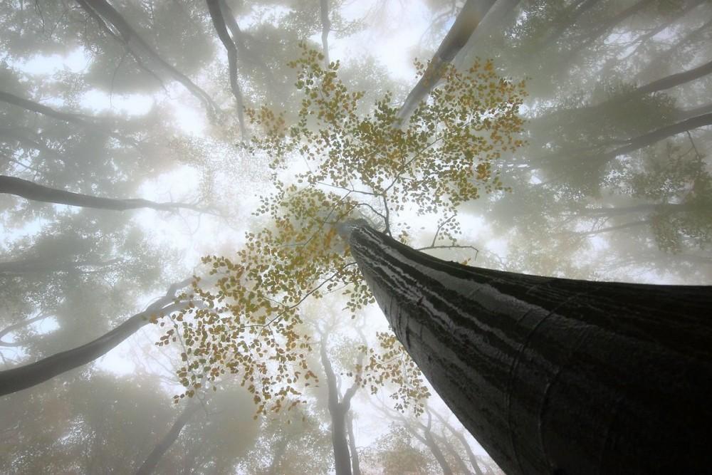 Буковый лес после дождя
