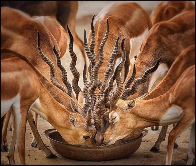 Букет из рогов