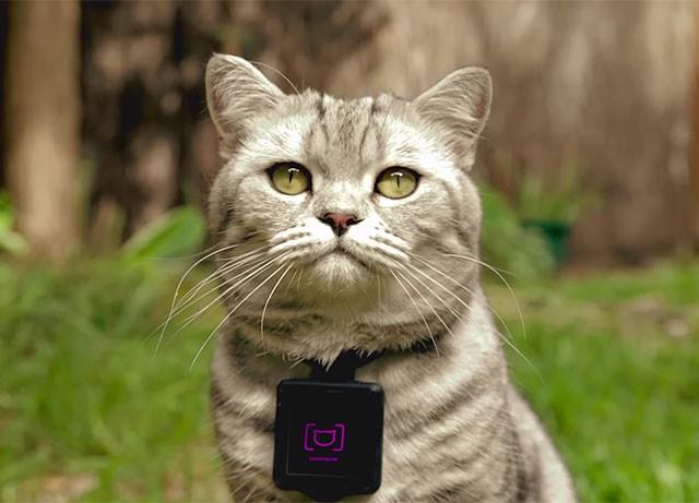 Catstacam - фотокамера для кошек