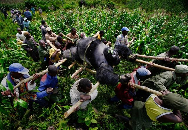 Финалисты фотоконкурса о социальных и экологических проблемах общества – Prix Pictet 2015