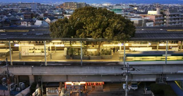 Железнодорожную станцию построили вокруг 700-летнего дерева