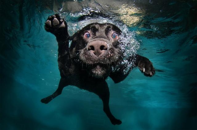 Замечательные фотографии из жизни собак