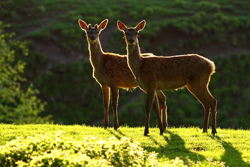 Прекрасные фотографии дикой природы Саймона Роя