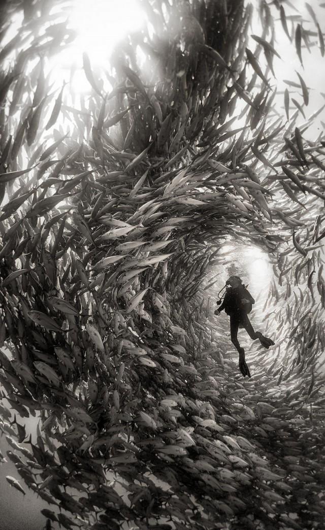 «Подводное царство»: духозахватые чёрно-белые фотографии жизни под водой