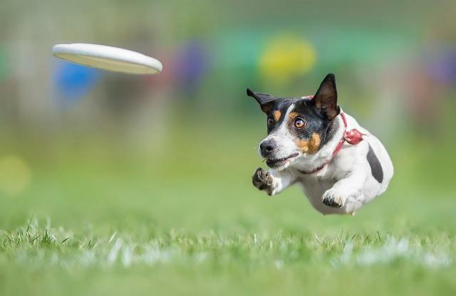 Супер собаки в фотографиях Клаудио Пикколи