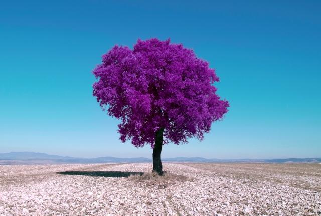 Как превратить пейзажное фото в сюрреалистическое инфракрасное изображение