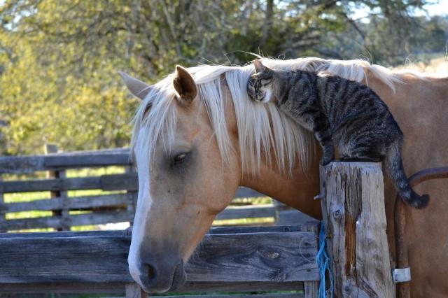 Самая странная и восхитительная дружба в мире животных