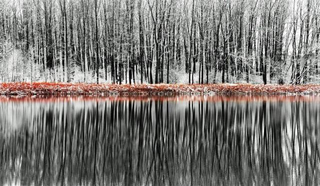 Лес отражается в озере