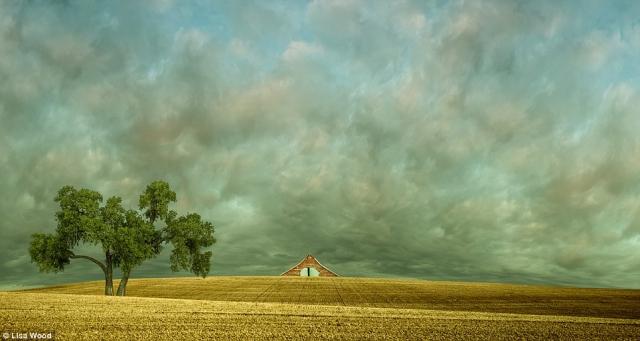 Блаженство и абстрактный реализм в сельских пейзажах Лизы Вуд (Lisa Wood)