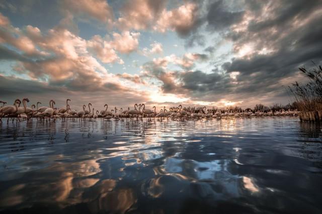 Фламинговый закат
