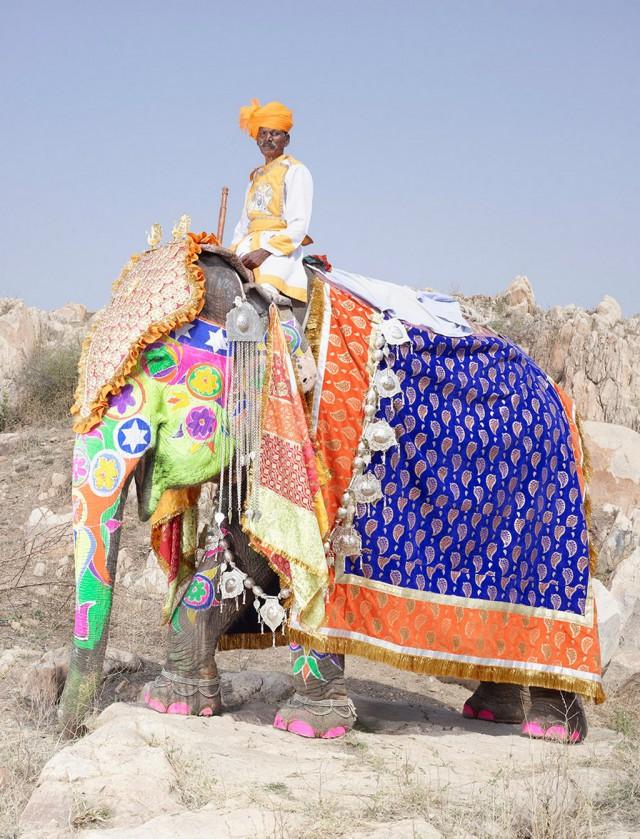 Фестиваль слонов в Индии – фотографии самых нарядных гигантских животных от Чарльза Фрегера