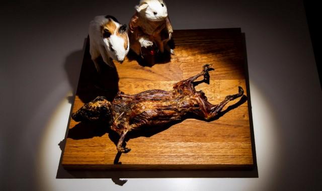 Музей отвратительной еды выставляет экзотические деликатесы