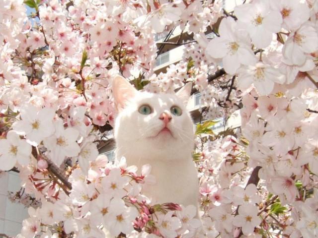 27 фотографий о том, почему весна опаздывает