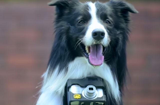 Nikon «Heartography» - фотоаппарат для собак, срабатывающий при учащении пульса