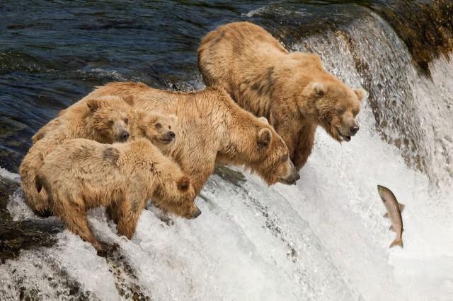 Семья рыбачит на Аляске