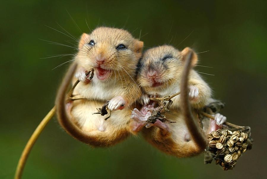 Очарование без границ - 30 фото животных, которые обнимаются