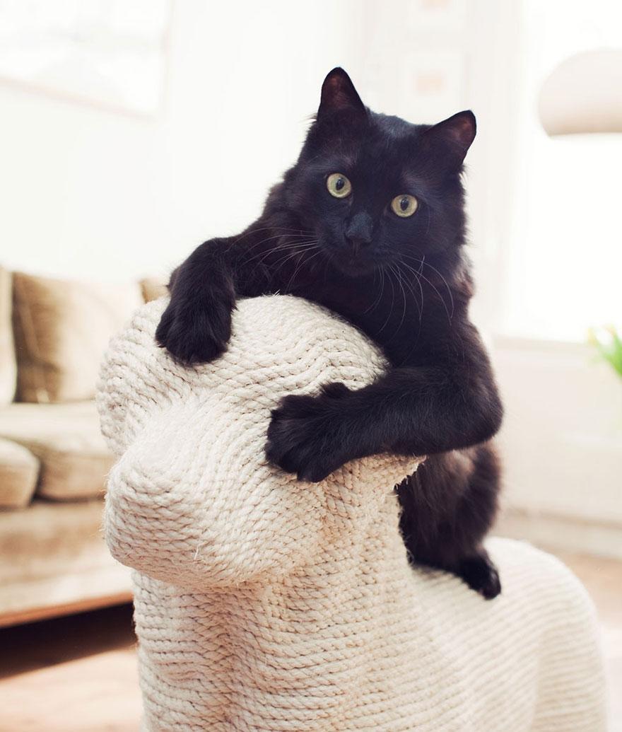 Когтеточки в виде собак, которые снимают стресс у кошек-15