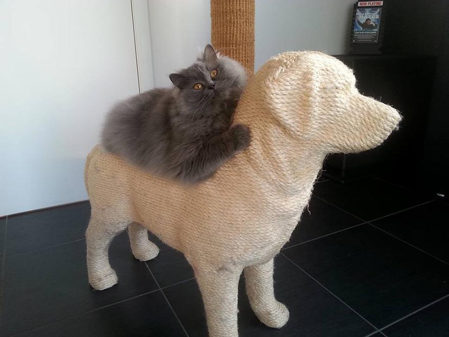 Когтеточки в виде собак, которые снимают стресс у кошек-4