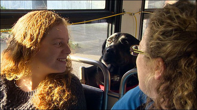 Independent Dog Rides the Bus by Herself to the Park