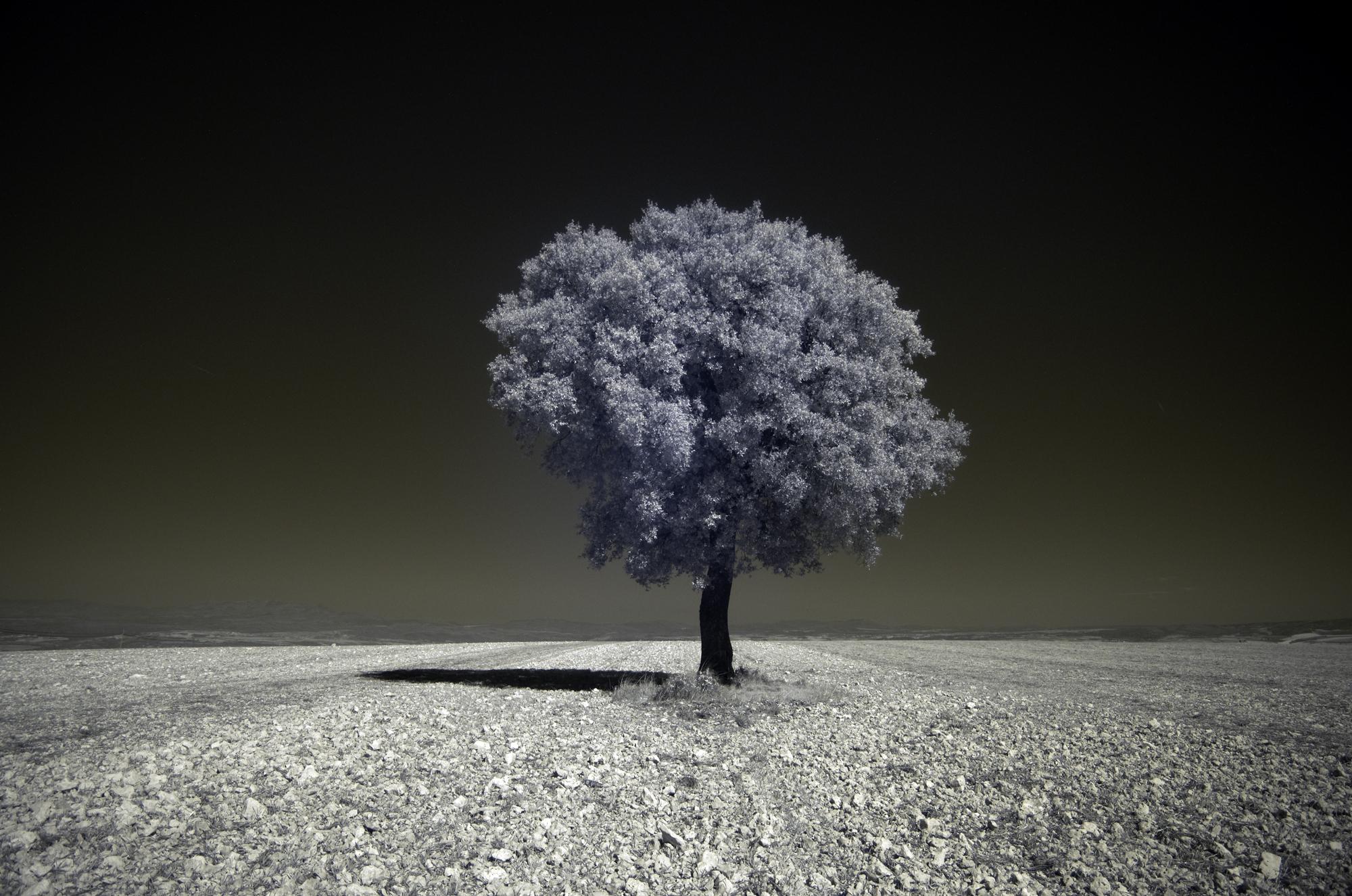 Как превратить пейзажное фото в сюрреалистическое инфракрасное изображение - 4a