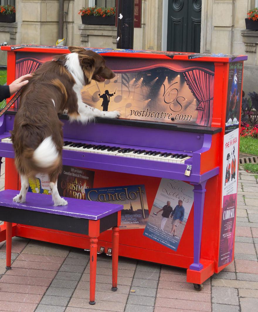 69 раскрашенных уличных пианино в разных городах мира-46