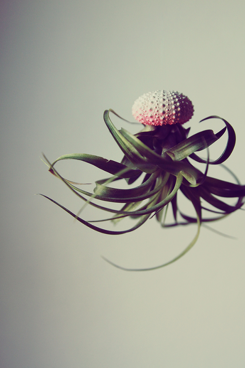Воздушные медузы в креативных цветочных горшках