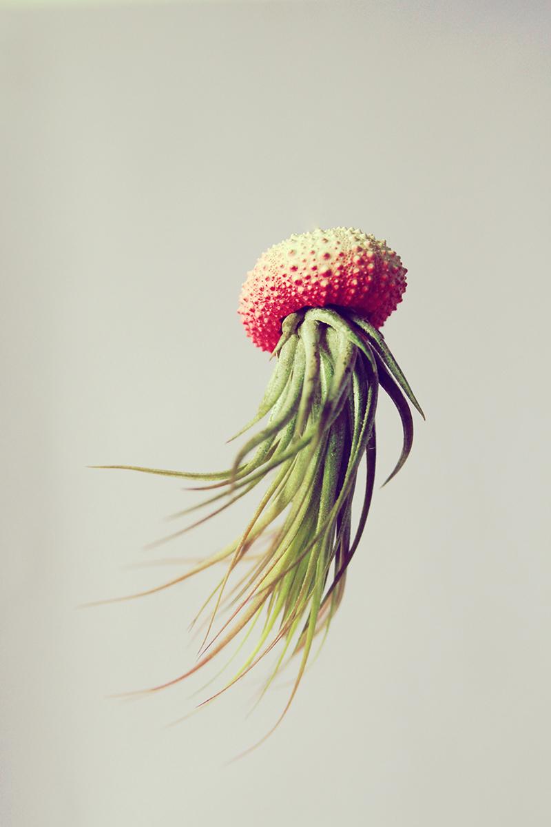 Воздушные медузы в креативных цветочных горшках - 5