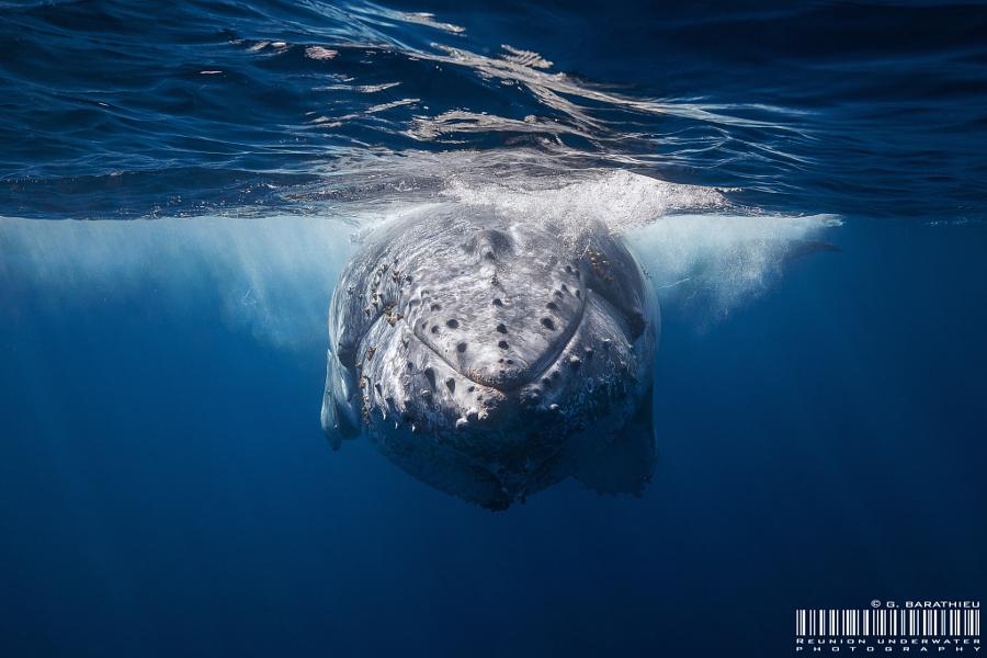 77 китов: