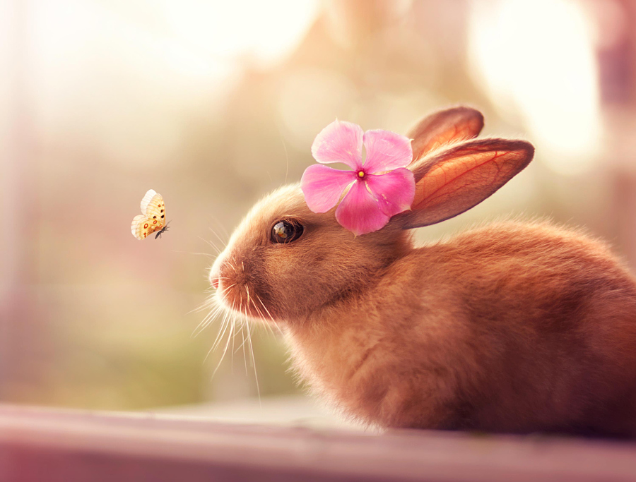 Photograph Welcome Spring by Ashraful Arefin on 500px
