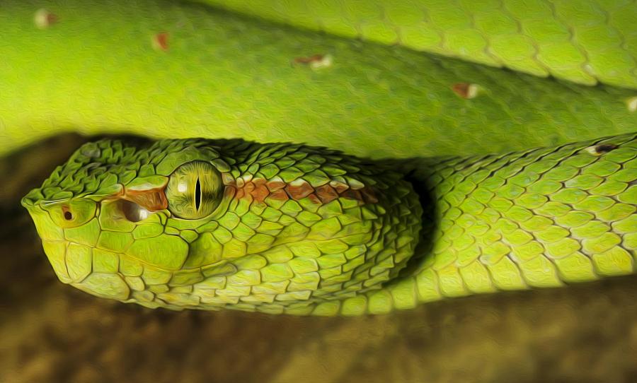 полоз фото змея