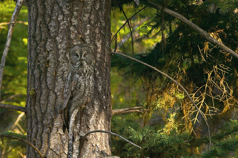 Гении камуфляжа в дикой природе – 23  животных