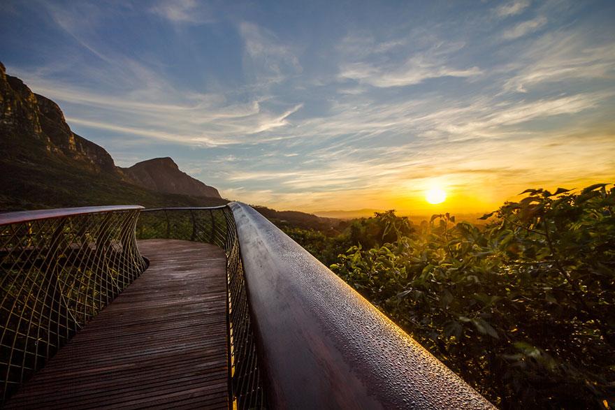 Тропа над деревьями в красивейшем ботаническом саду Кейптауна