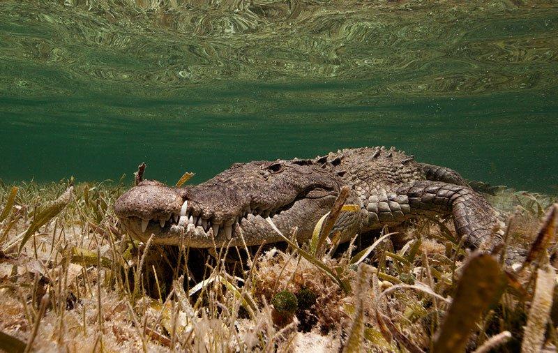 Подводные животные в захватывающих фотографиях Хорхе Сервера Хаузера