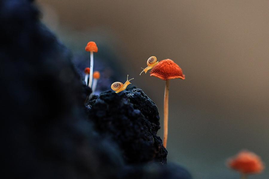 Любопытные улитки - 21 чудесное фото