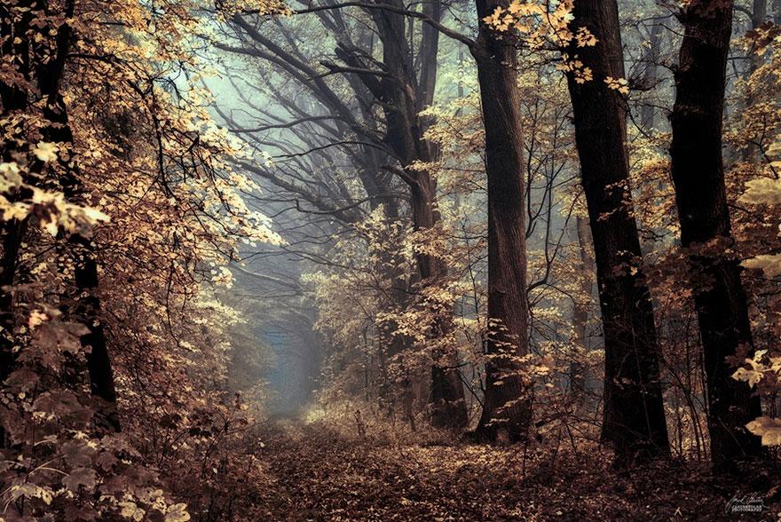 Мистический осенний лес чешского фотографа Янека Седлара