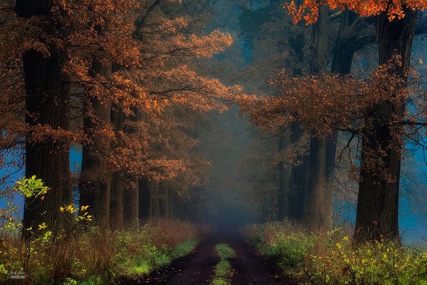 Мистический осенний лес чешского фотографа Янека Седлара-2