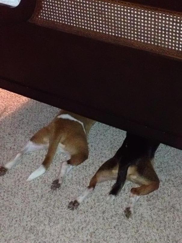 Картинки по запросу Собаки которые думают что их не видят