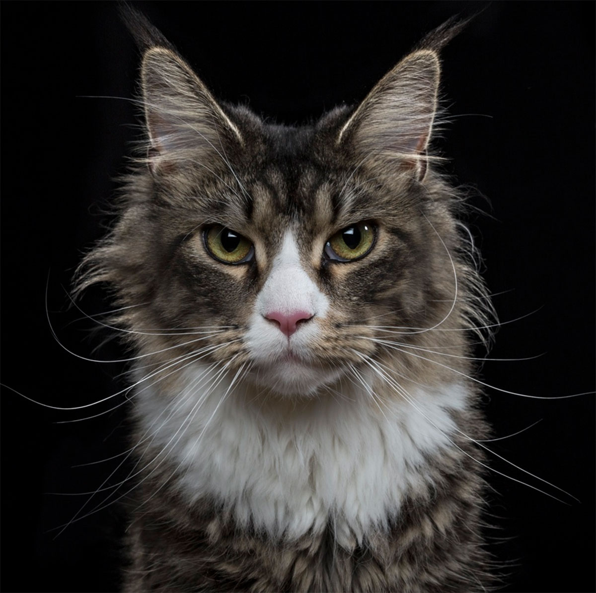 Роберт Бахоу. Чистосердечные портреты животных.