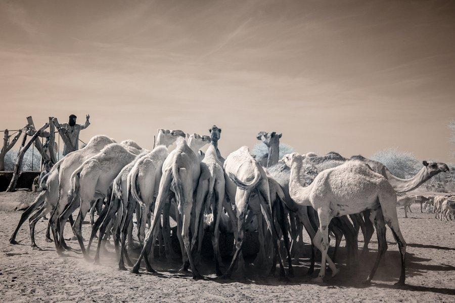 Кочевые племена Нигера в инфракрасных фотографиях Терри Голд-13