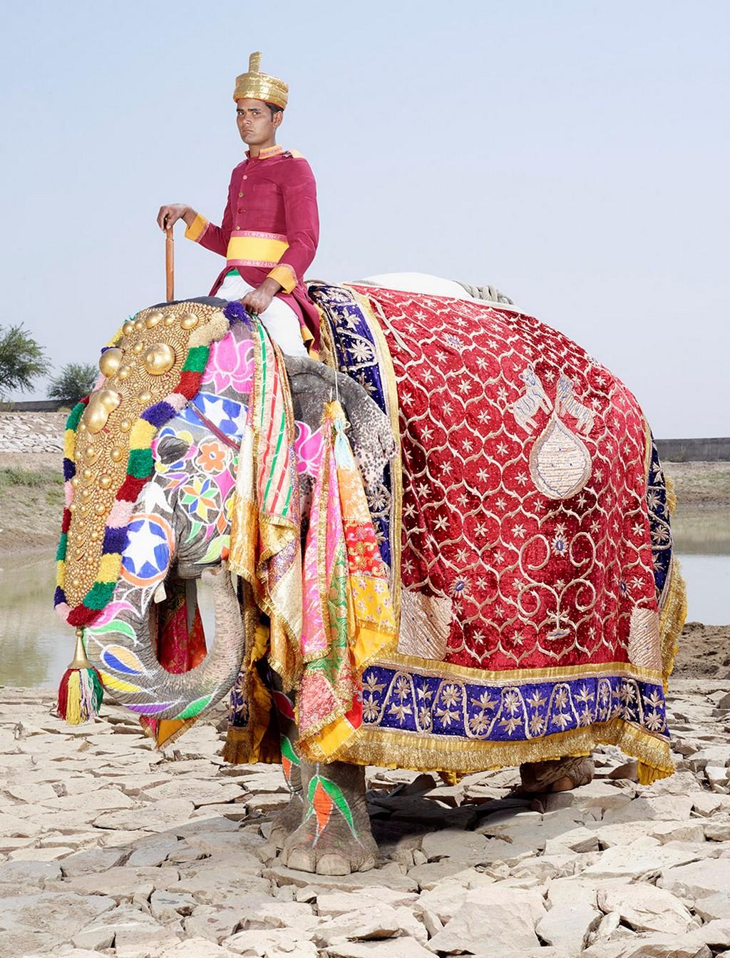 raspisnye slony 10