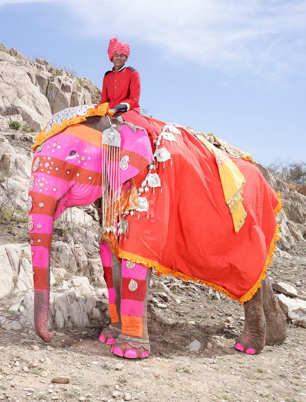 raspisnye slony 12