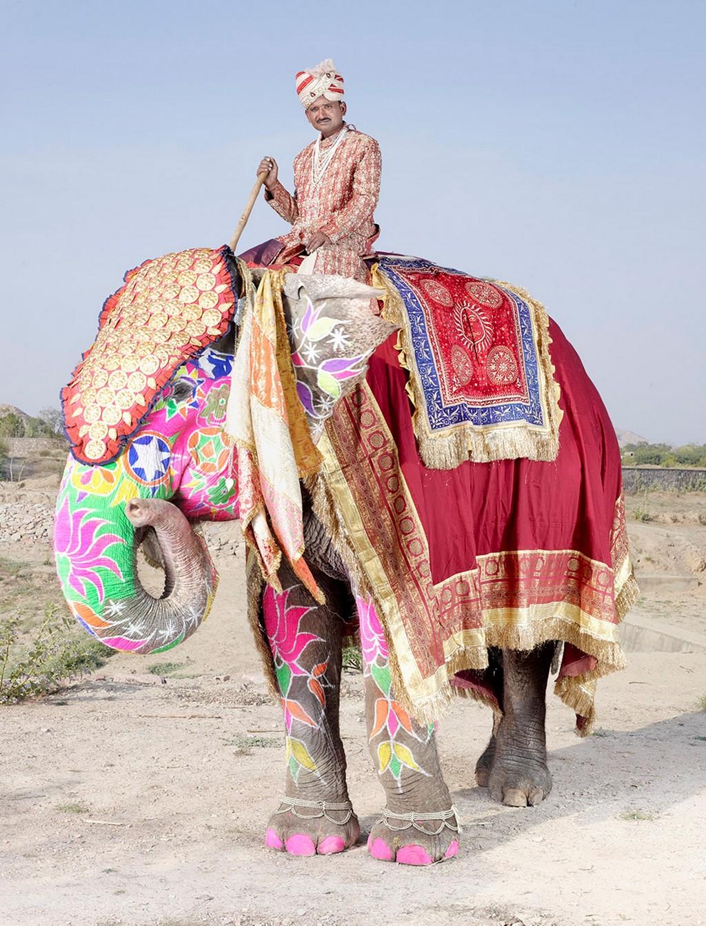 raspisnye slony 2