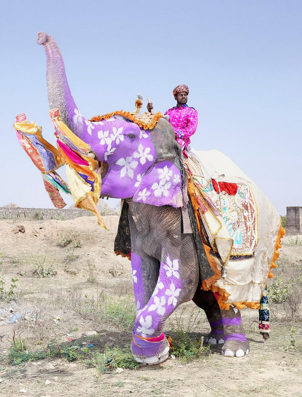 raspisnye slony 3