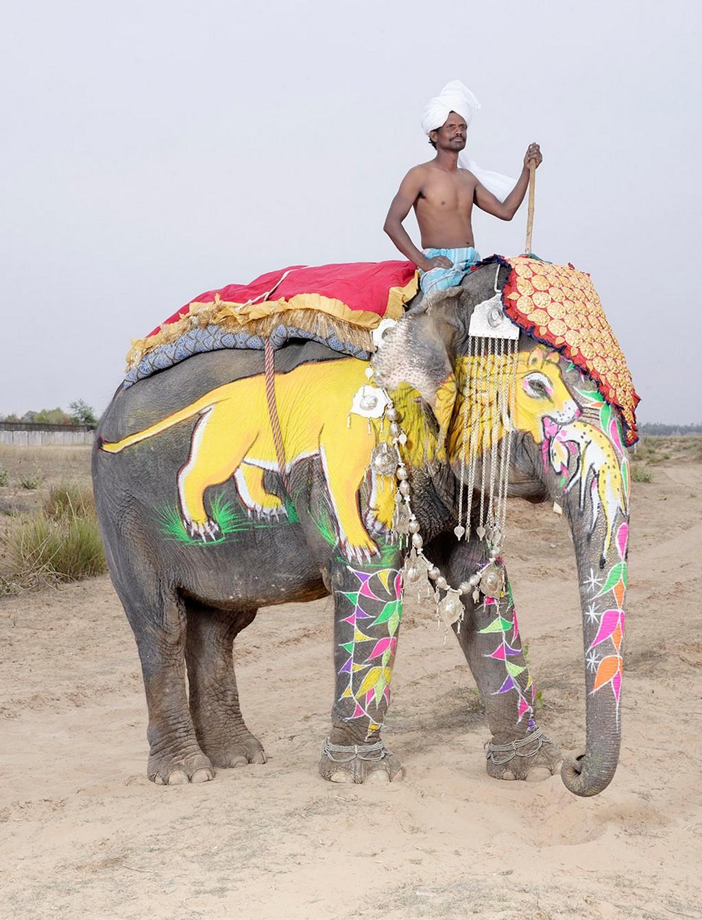 raspisnye slony 4